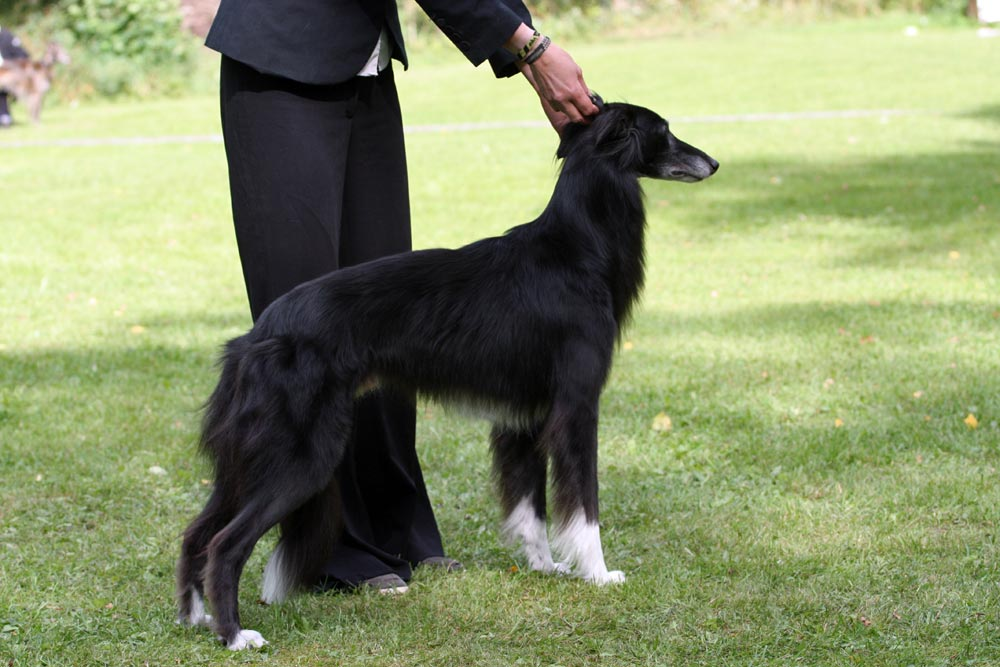 a description of my first pet skippy How much exercise can you give your dog each day  no, this is my first pet   describe the size, energy level, and temperament you'd like in your new dog.